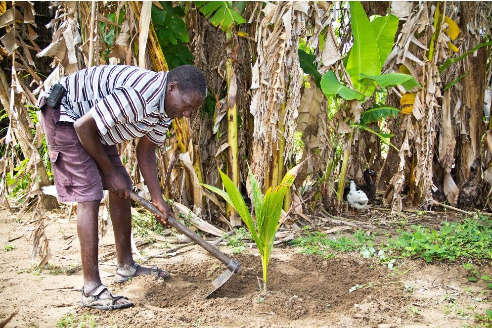 VJW International Development - MCC Mozambique Evaluation - Forestry