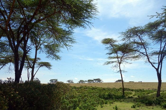 VJW International - Aid Effectiveness and Joint Programming - Kenya